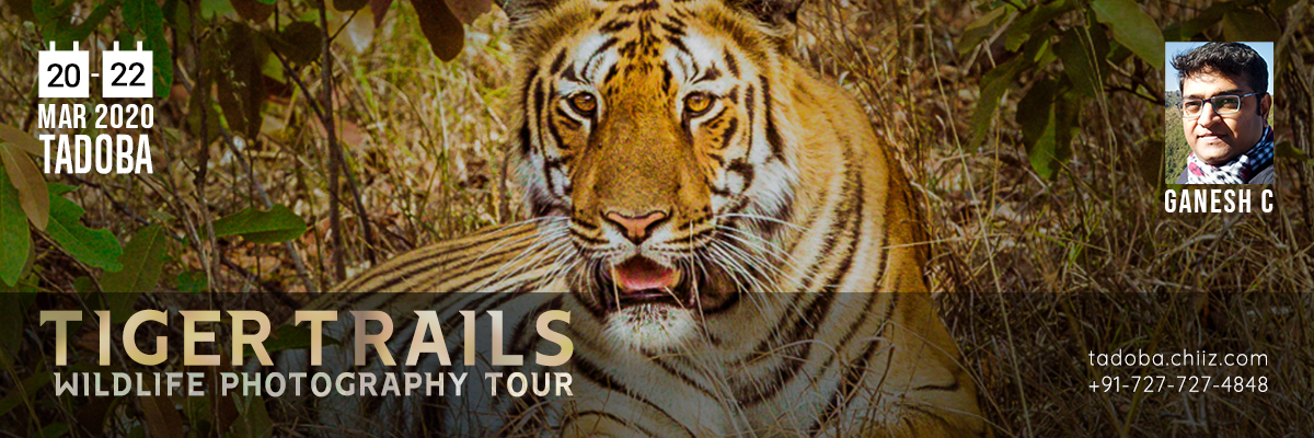 TADOBA WILDLIFE PHOTOGRAPHY TOUR