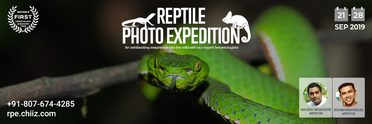 Reptile Photo Expedition